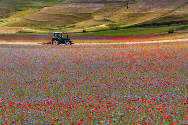 Prepara Tractor Primavera